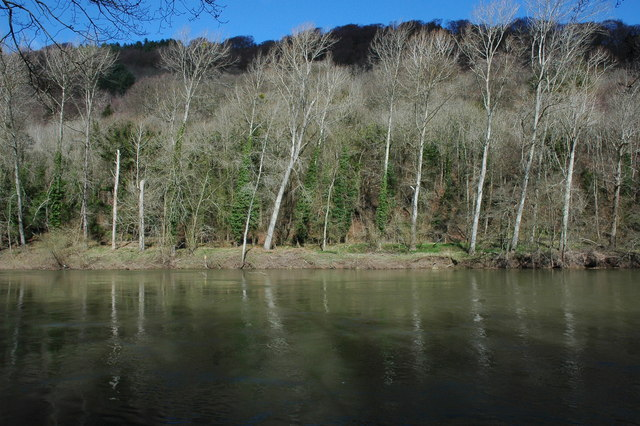 Trees on the banks of the River Wye