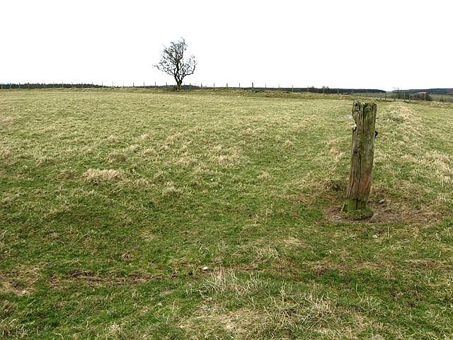 A pasture field near Setthorns