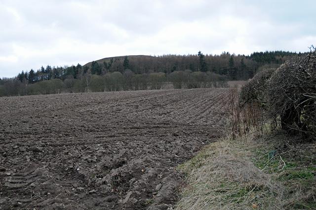 Farmland Looking Towards Newtyle Hill