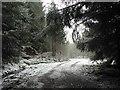 NN5754 : Under trees in Rannoch Forest : Week 11