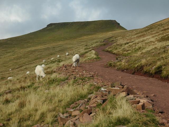 Path to Bwlch Duwynt
