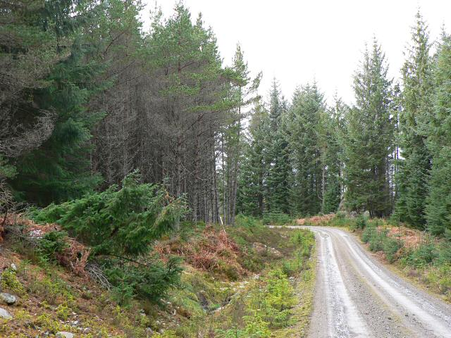 Track in Rannoch Forest