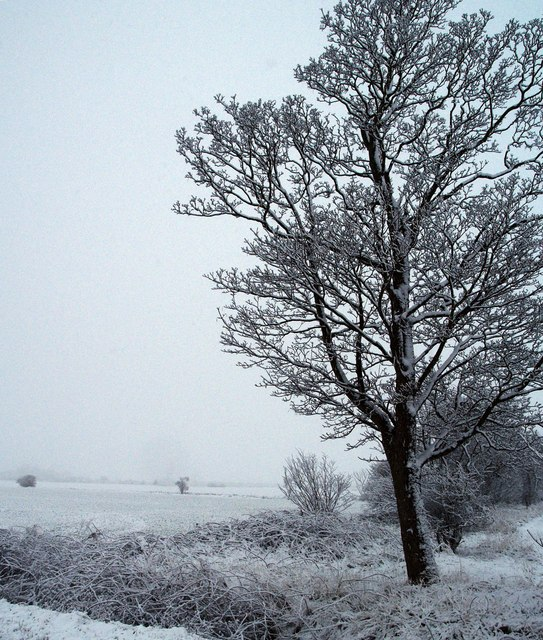 Snow Clad Tree on the Hedon to Paull Road