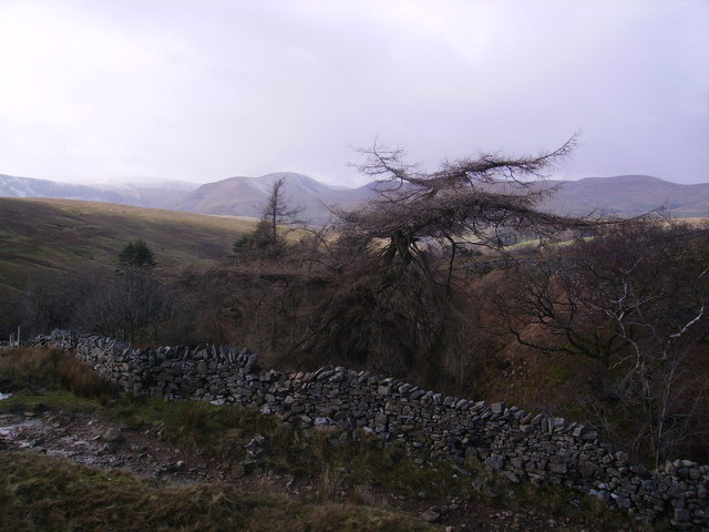 Larch, Whin Stone Gill