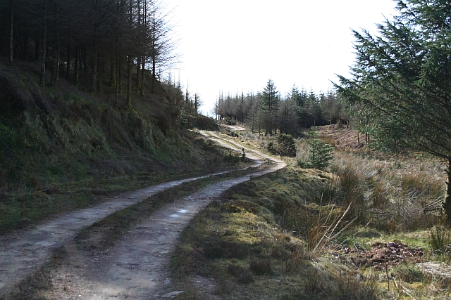 Kintyre Forestry Road (2)
