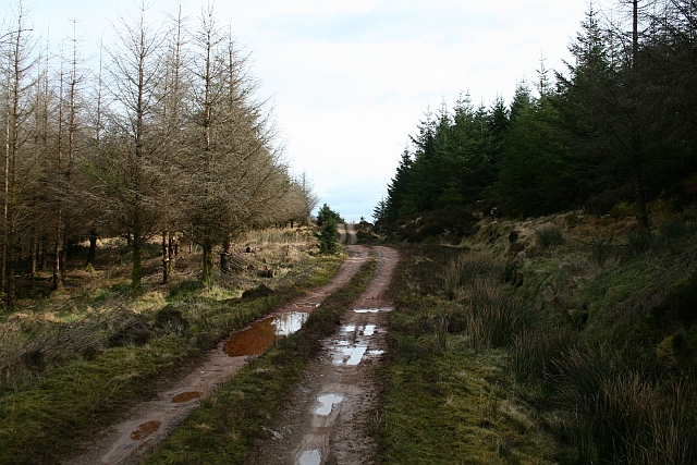 Kintyre Forestry Road (3)