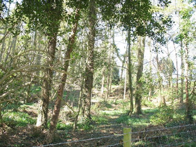 Coed Llysdulas Woods