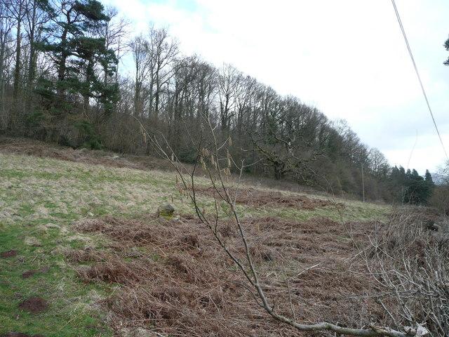 Edge of Myarth Wood