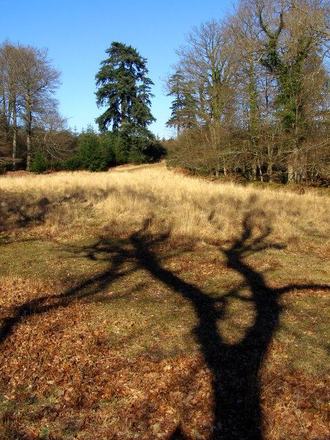 Blackensford Lawn, North Oakley Inclosure, New Forest