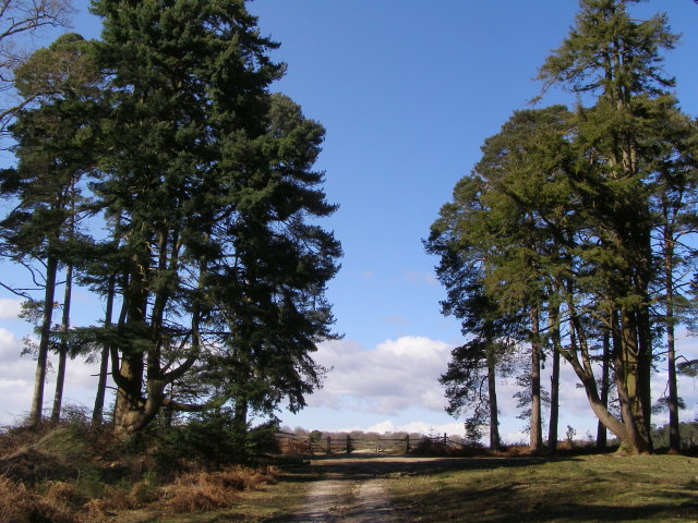 Track along Sandy Ridge, North Oakley Inclosure, New Forest