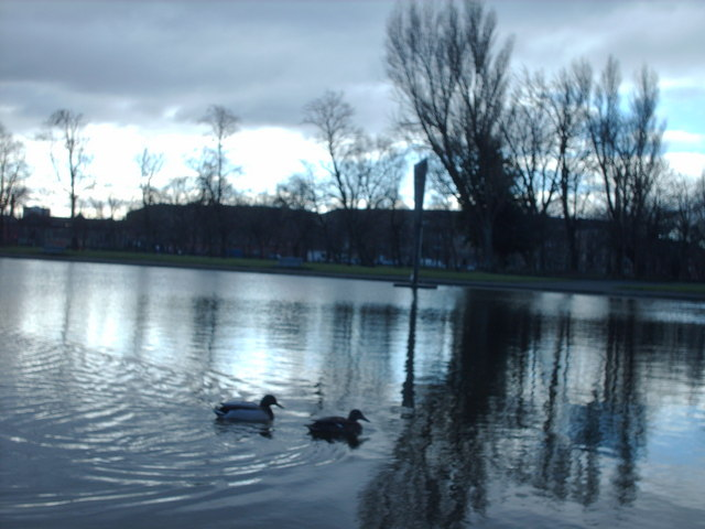 Ducks on Elder Park Pond