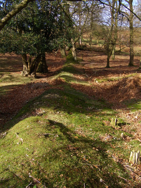 Earthen bank, north-west edge of Backley Inclosure, New Forest