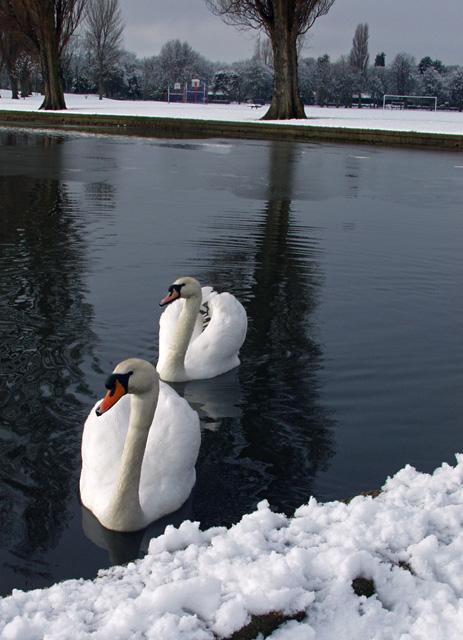 Swan Lake or Snow White?
