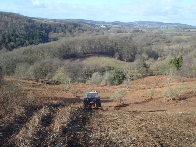 Undergrowth mowing on Chase End Hill