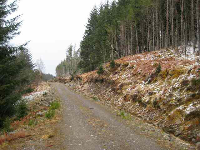 Hillside forest track