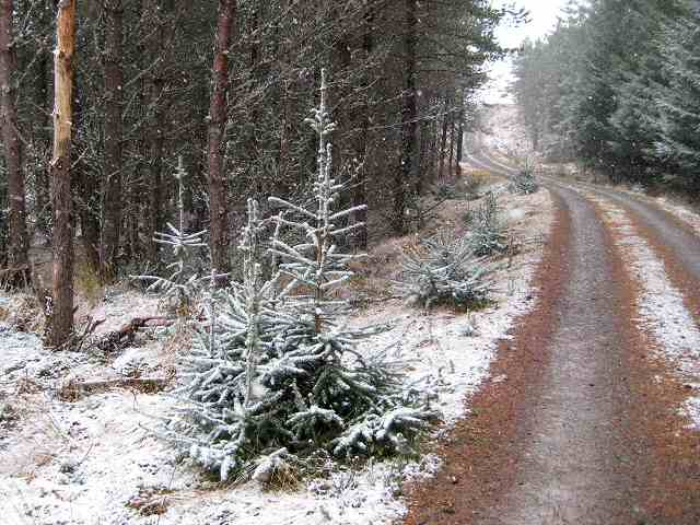 Snowy forest track