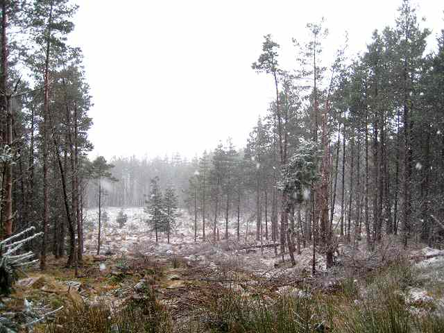 Clearing in Rannoch Forest