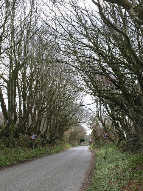 Lane approaching Trefrew