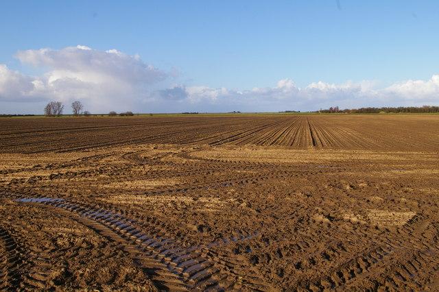 New Common Marsh