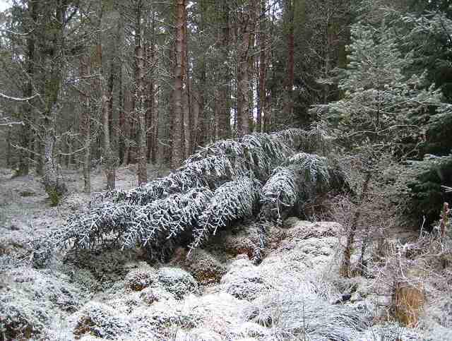 Snow in Rannoch Forest