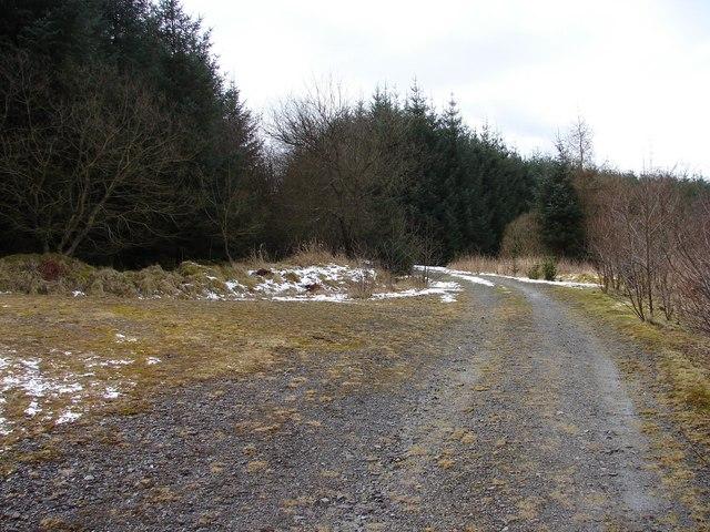 Auchenvey Forest - Auchenvey Hill
