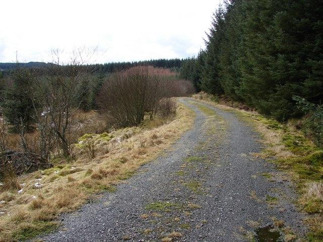 Auchenvey Forest - White Hill