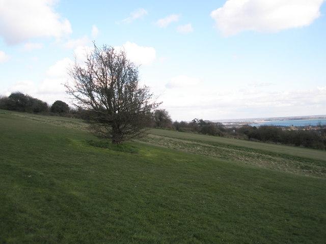 Windswept tree on Portsdown Hill
