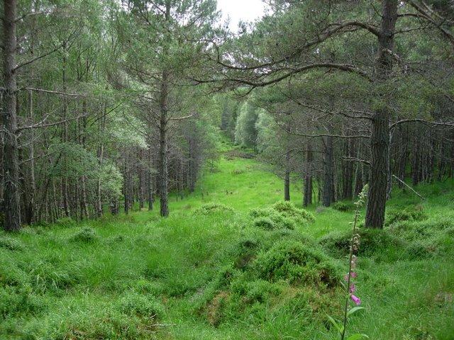 Ride through woodland