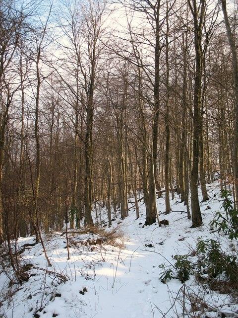 Elm Hag Wood