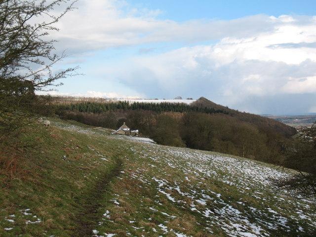 Woodland edge near Wass