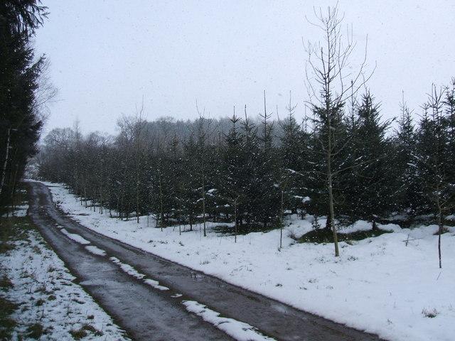 Flakebridge Wood
