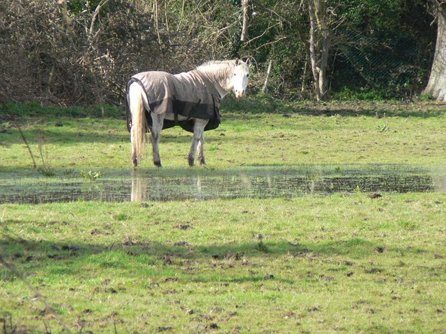 Throop: horse without a sense of smell