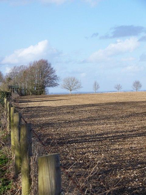 Cultivated fields near Homington