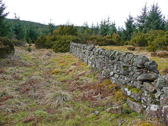 Stone dyke in woodland clearing