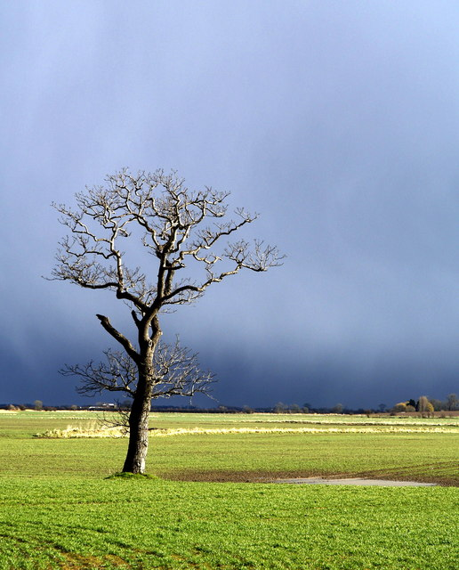 Solitary Storm Tree