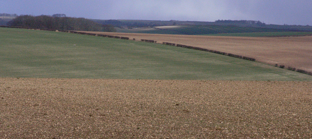 Fields between Withcall and Cadwell