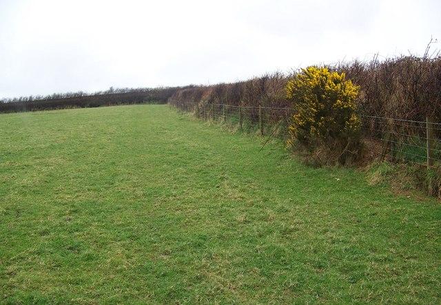 Field boundaries near West Down