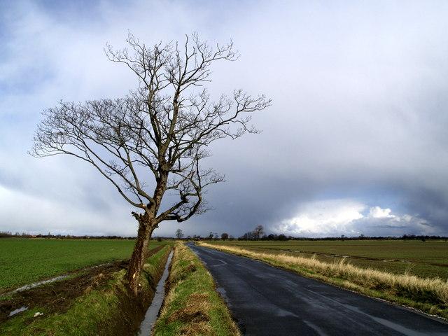 Solitary Roadside Tree