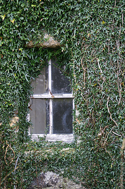 Ivy-framed window