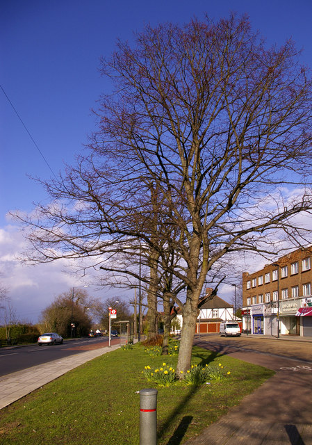 Lime Trees, Bramley Parade, London N14