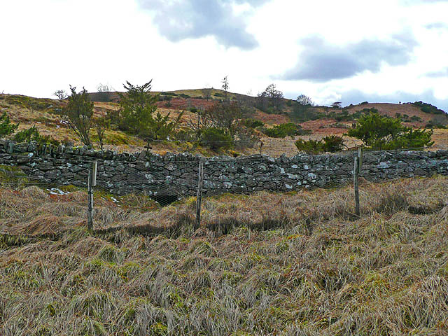 Fence and drystone dyke at the edge of the wood