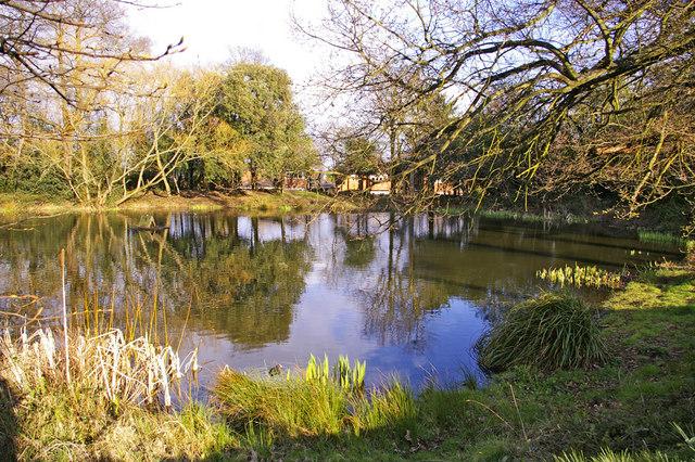 Pond, Lakeside, Enfield
