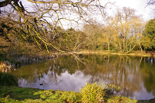 Pond, Lakeside, Enfield
