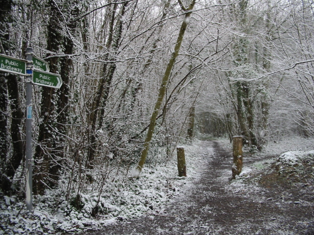 Bridleways in the snow, Covert Wood