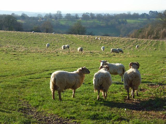 Pasture, Hambleden