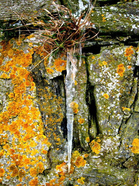 Newburgh: Lichens and icicle on Knockhall Castle