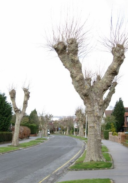 Alien-looking trees