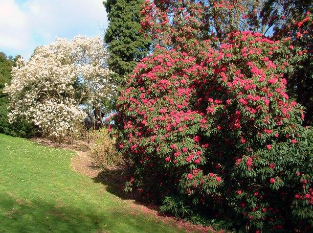 Spring Heligan Gardens