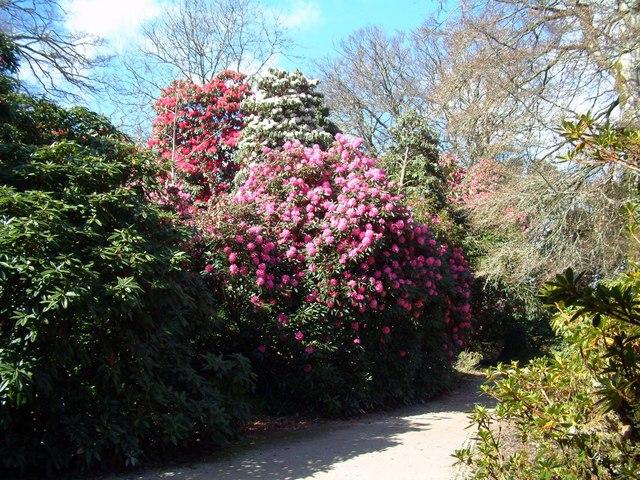 Heligan Gardens Sunny Spells
