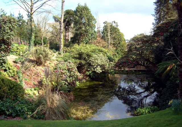 Pond at Heligan Gardens